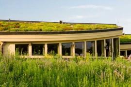 Ny handbok guidar till gröna tak