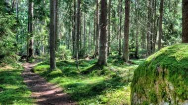 Kartläggning av grön infrastruktur ska ge mer hållbar samhällsplanering