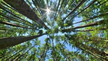 Ny metod för utvärdering av ekosystemtjänster